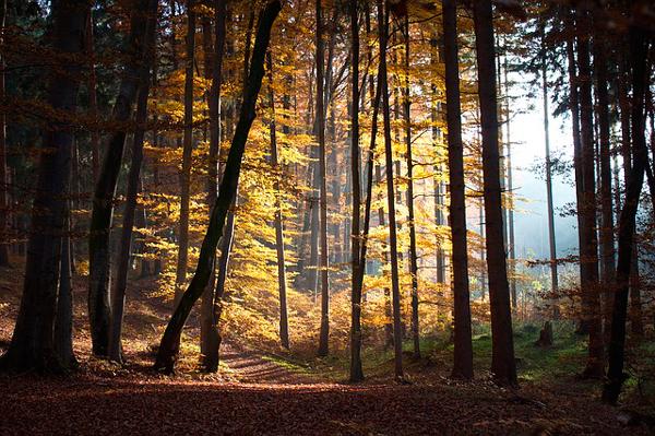 humor-arboles-otonales-hojas-coloridas-bosque-caminata_121-50651